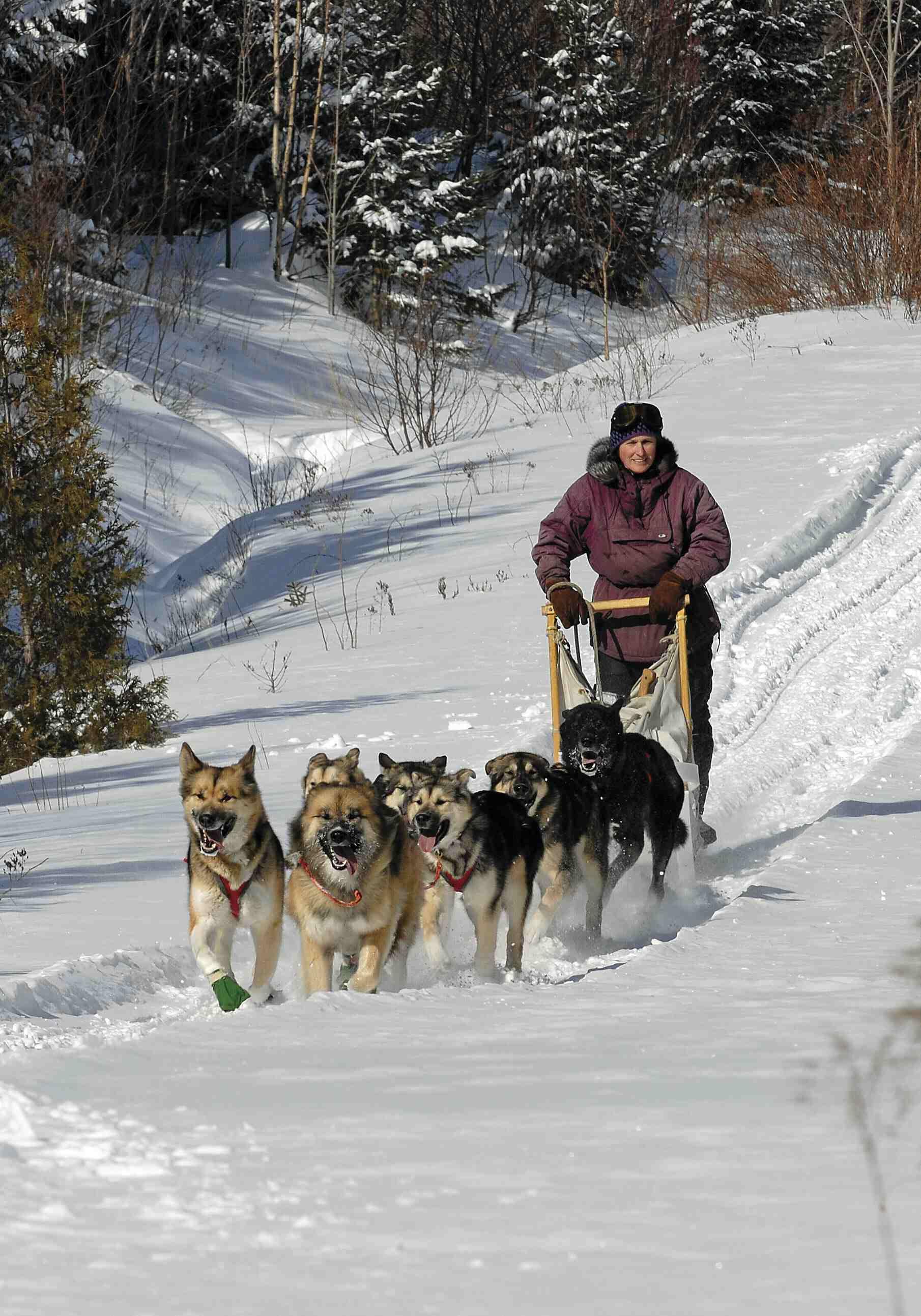 Maccabe-Dogsledding-Dogsledding_02-07  169#DBAF.jpg